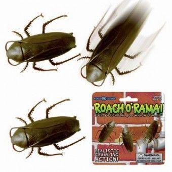 Roach'O'Rama